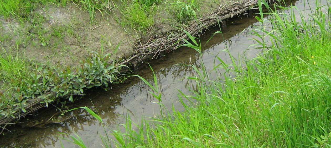 26.6.2013: Neue Uferbefestigungen aus Weidenholz